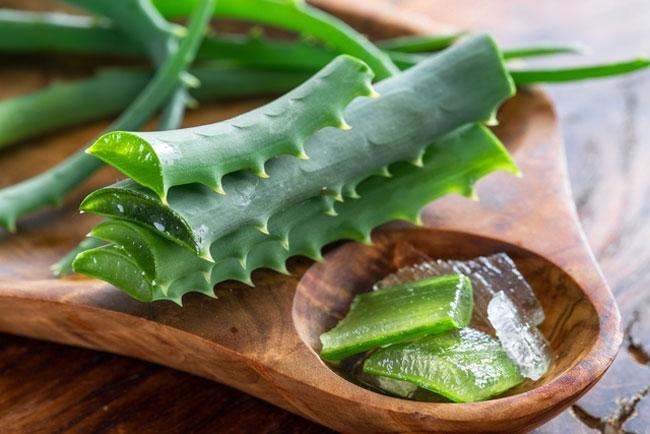 Os benefícios da Aloe Vera